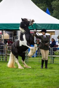 Tilly at the BUA Show